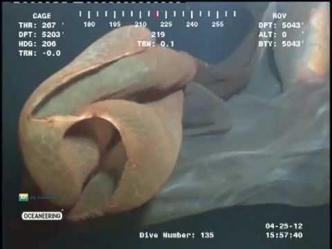 podvodno cudoviste