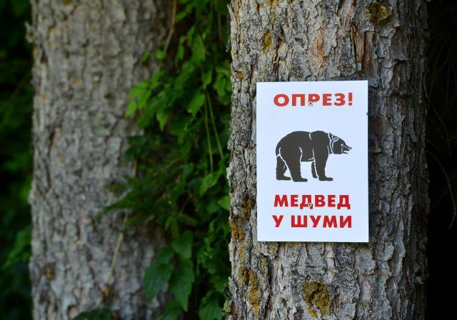 medvjed u sumi