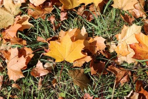 Jesen Vodice 2