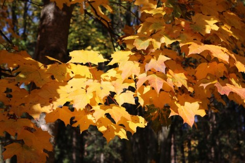 Jesen Vodice 3